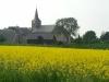 Koolzaad en uitzicht op de kerk